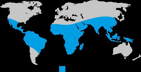 Polio Risk Area Map
