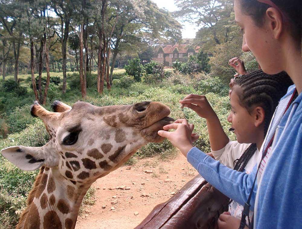 Two children feeding a Giraffe