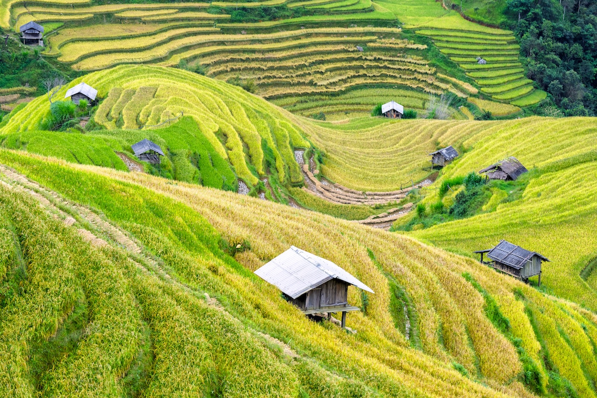 Green farmland in Vietnam