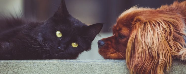 does the coronavirus affect animals like cats and dogs