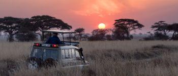 Safari vehicle driving through african bush with the sun setting behind