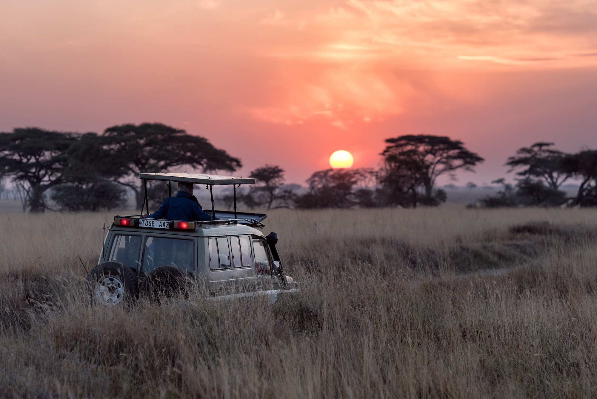 Safari vehicle driving through african bush with the sun setting behind