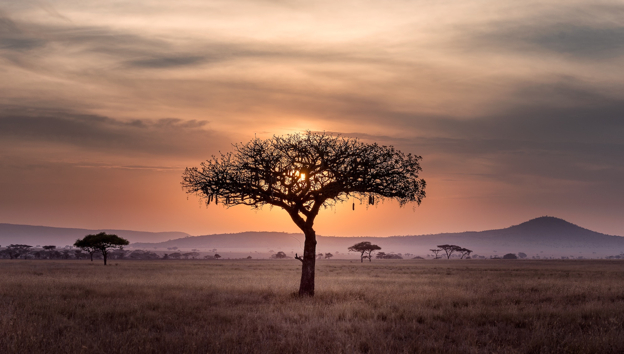 A single tree silhouetted against the sunset in Tanzania
