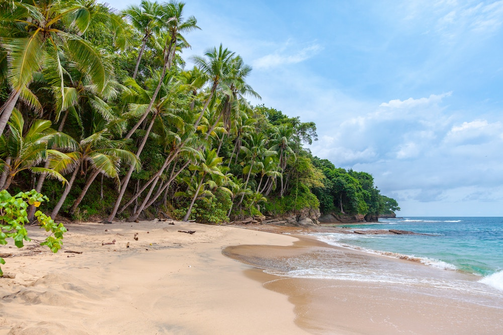 A sandy beach in Sri Lanka with palm trees